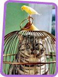Cat in a canary cage